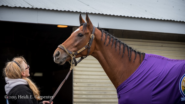My Favorite Photographs Of 2015 Horse Racing Nation