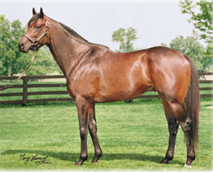 Midnight Interlude Another Curlin